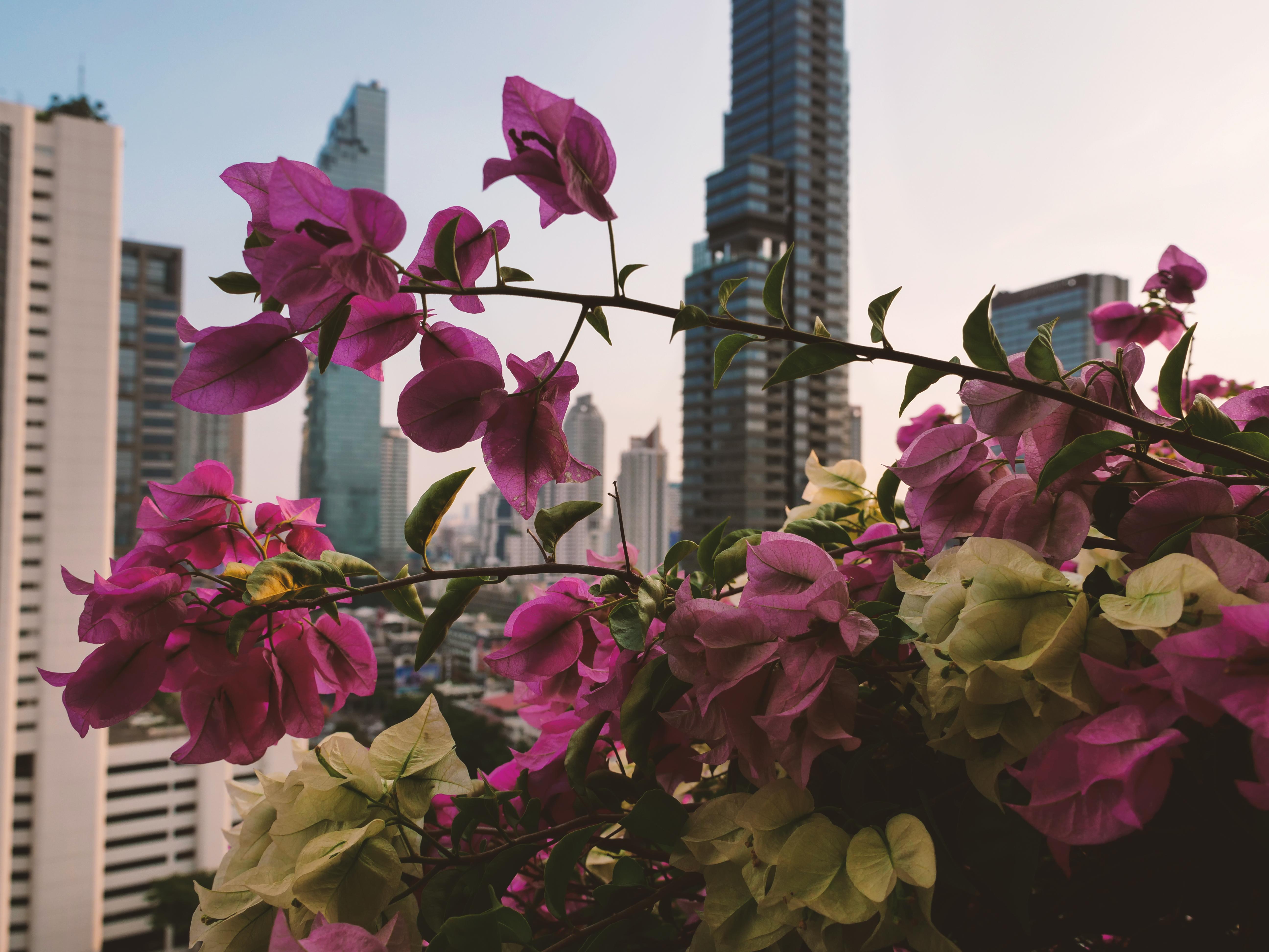 bangkok nocleg
