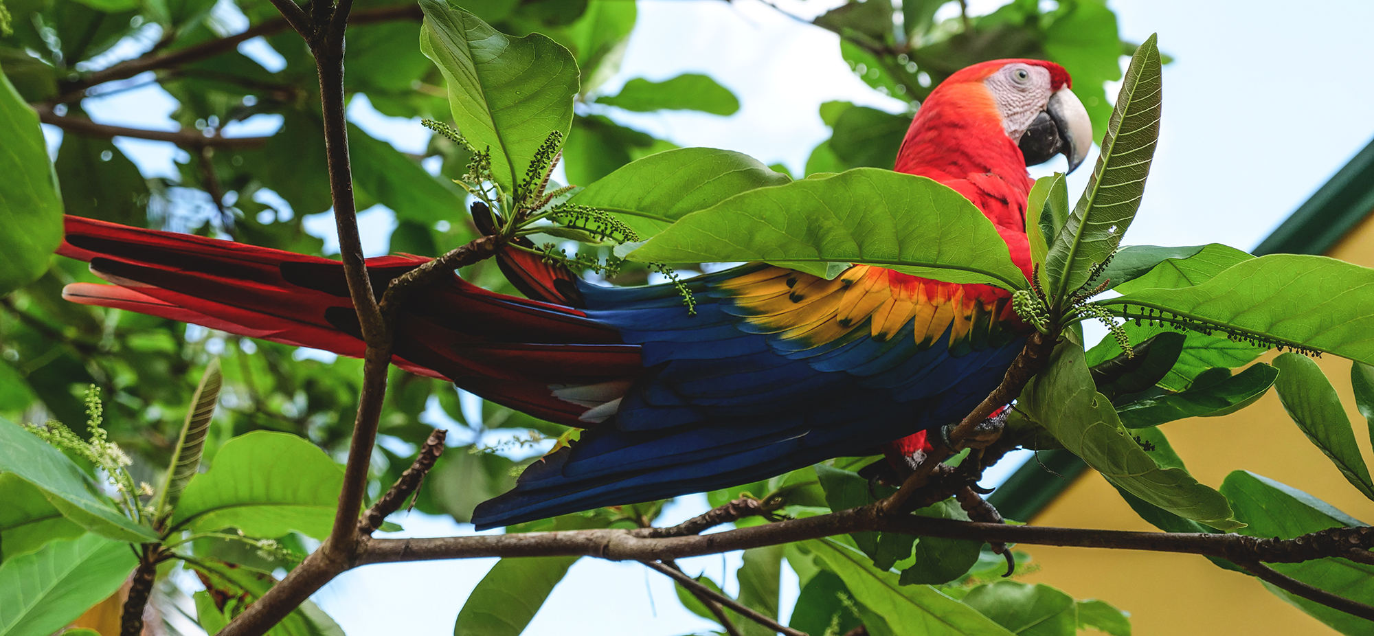 kostaryka dobry nocleg