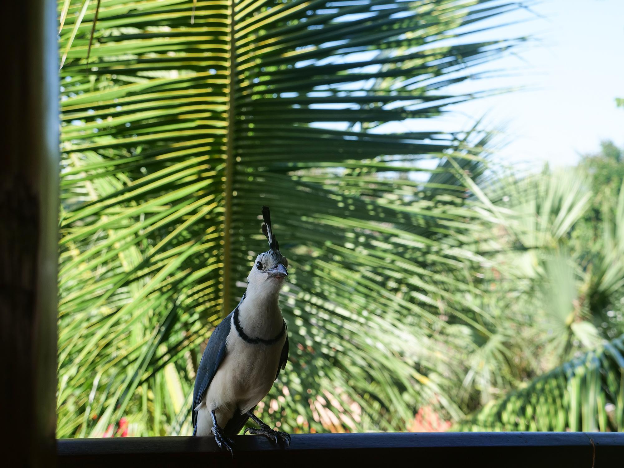 noclegi kostaryka