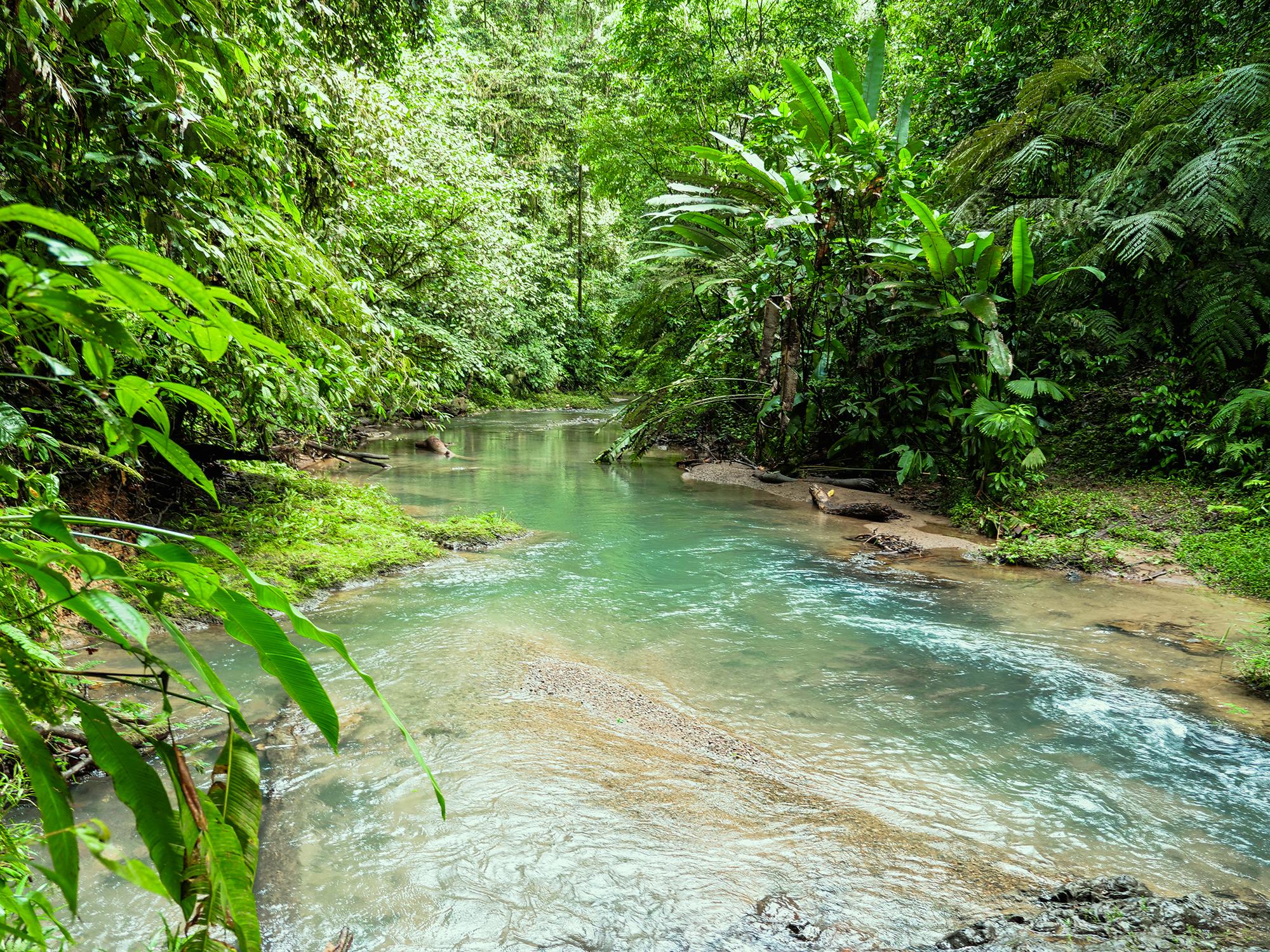 kostaryka park narodowy corcovado