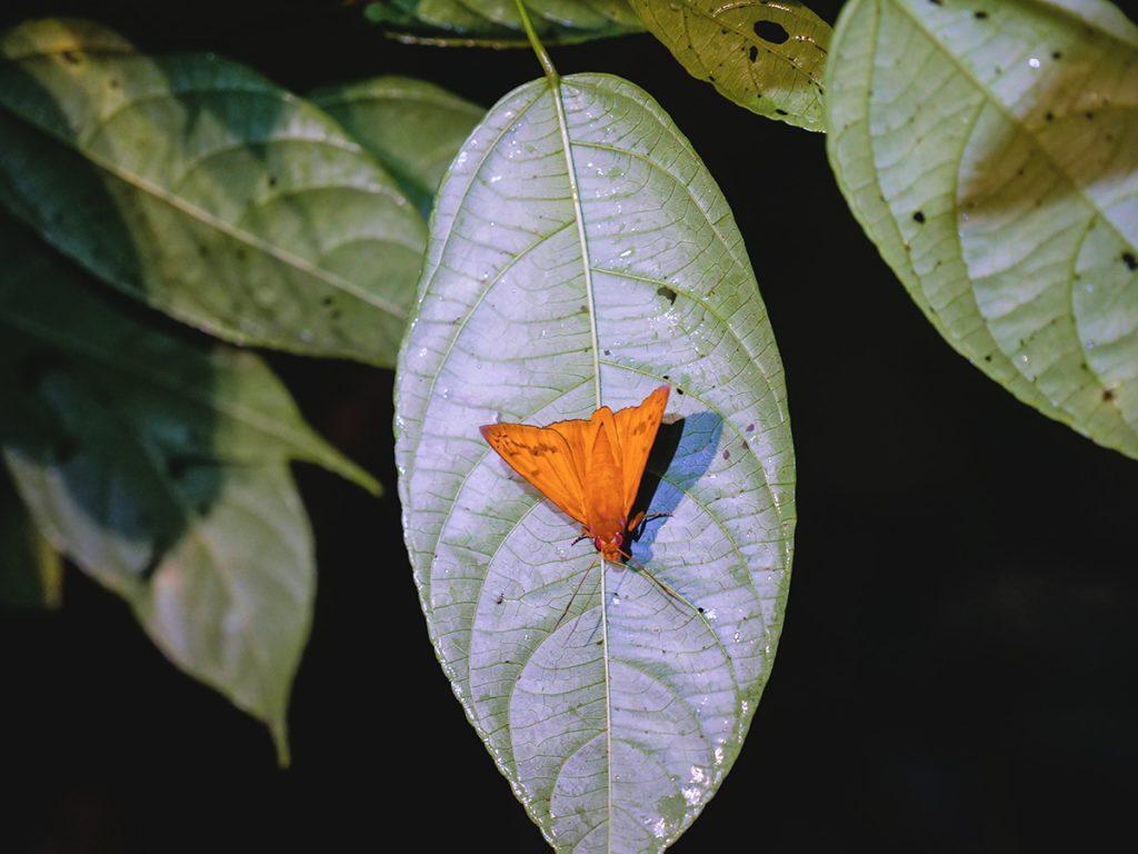 motyle kostaryka