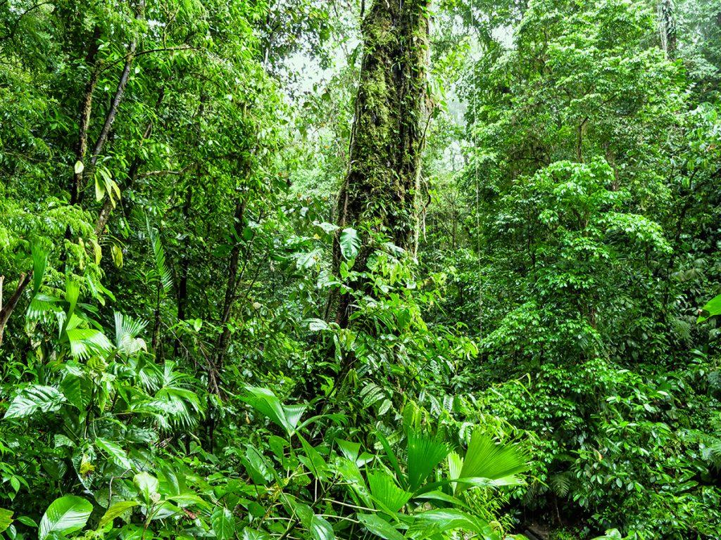 kostaryka półwysep osa
