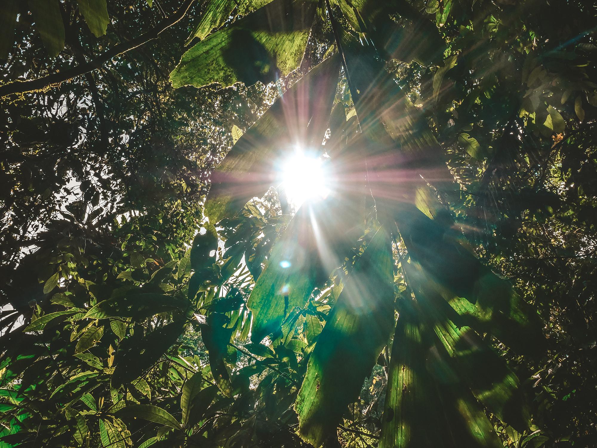kostaryka park corcovado dojazd