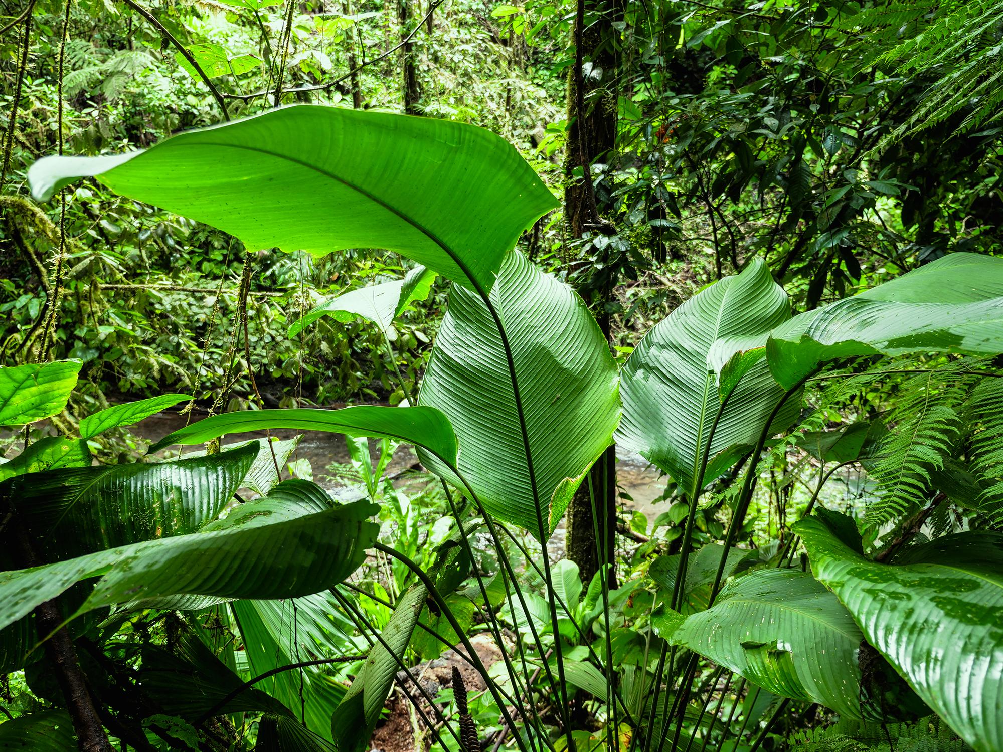 kostaryka najpiękniejsze miejsca