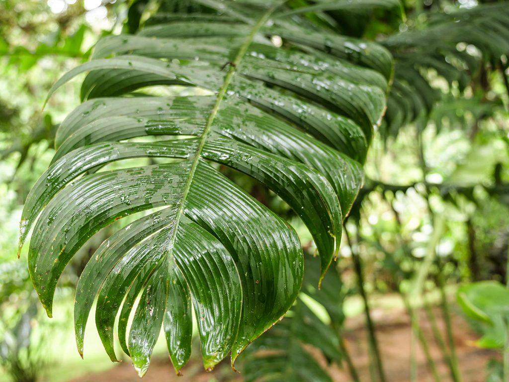 kostaryka który park narodowy wybrać