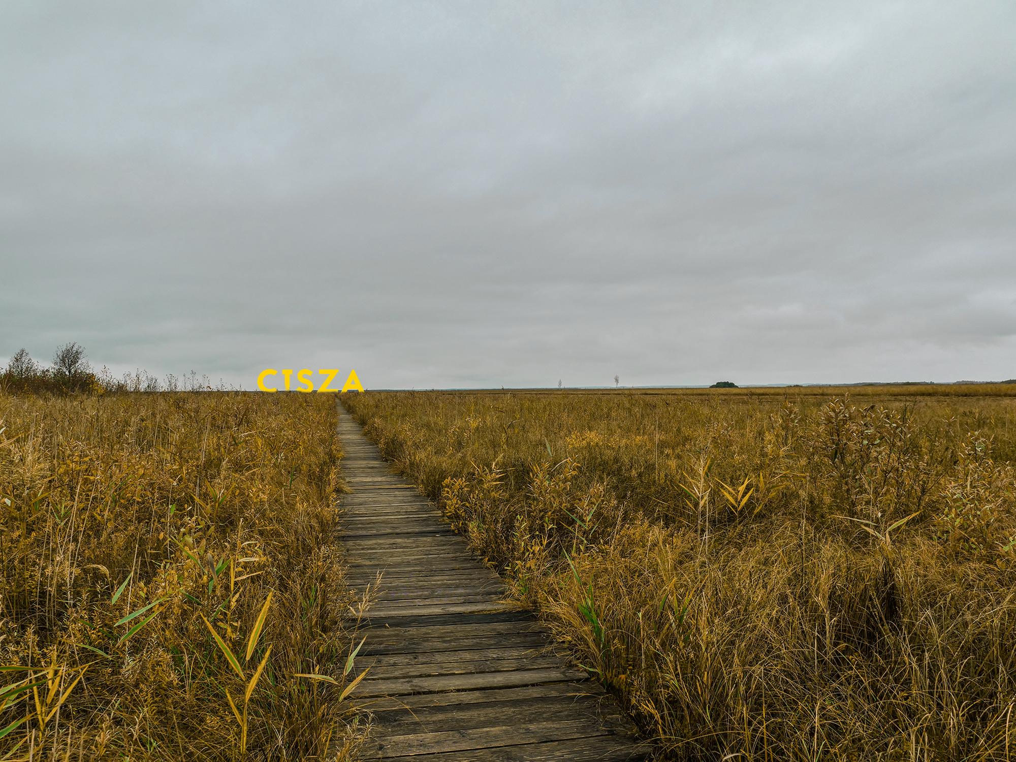 biebrzanski park narodowy łosie