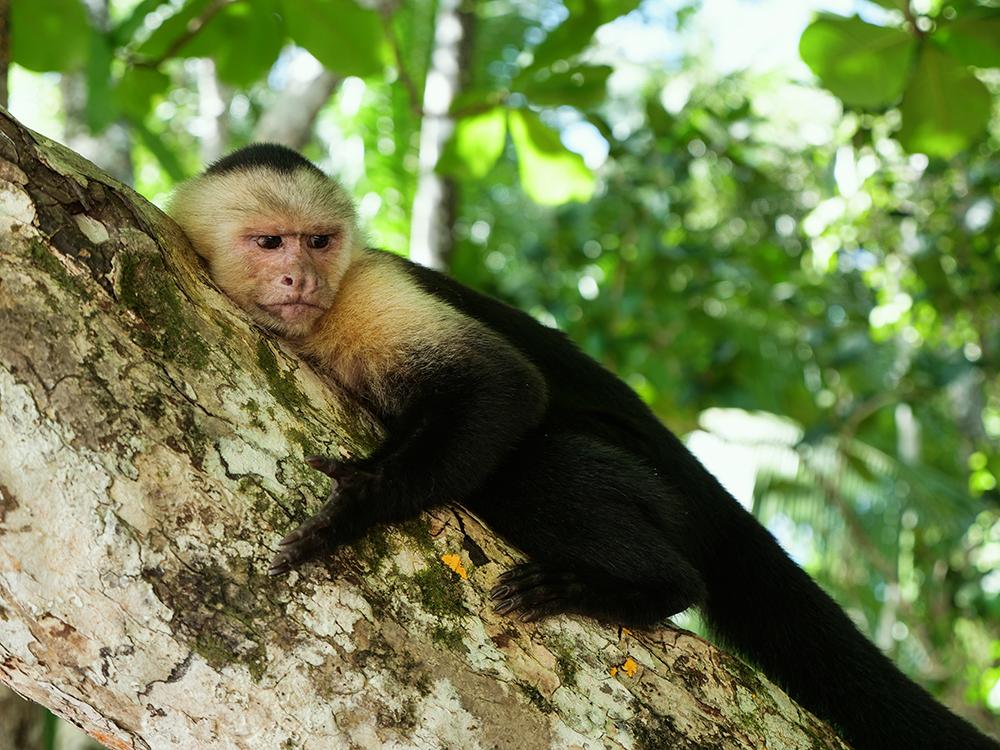 najpiekniejsze miejsca w kostaryce