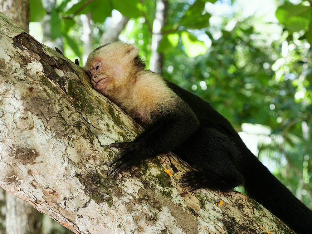 najpiekniejsze parki narodowe w kostaryce