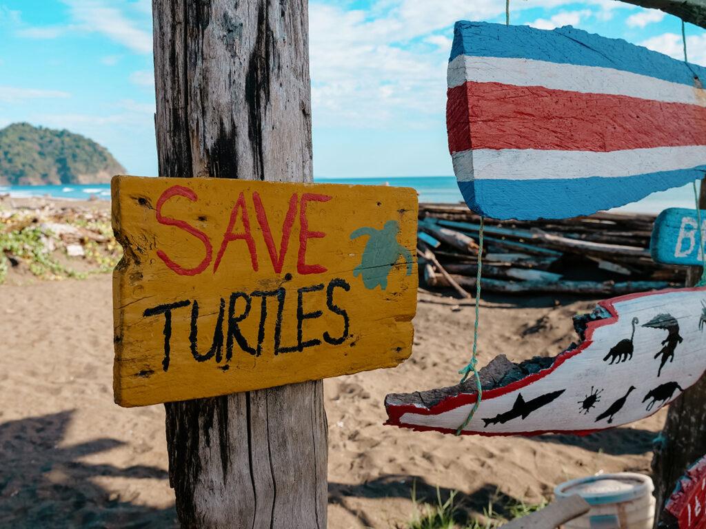 kostaryka plaże żółwie