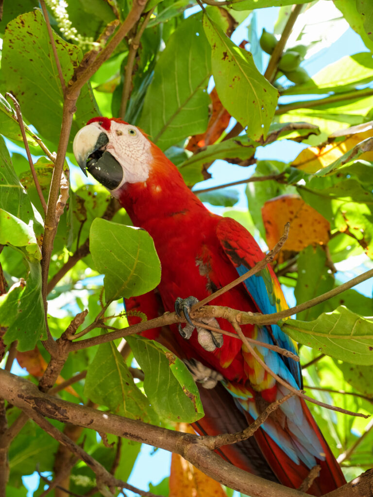 plaza z papugami kostaryka