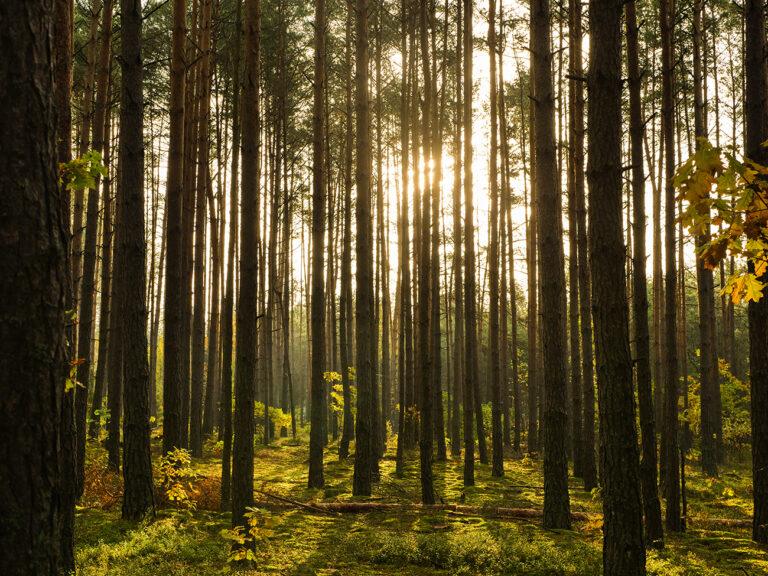 nocleg w lesie pod namiotem w polsce czy to legalne