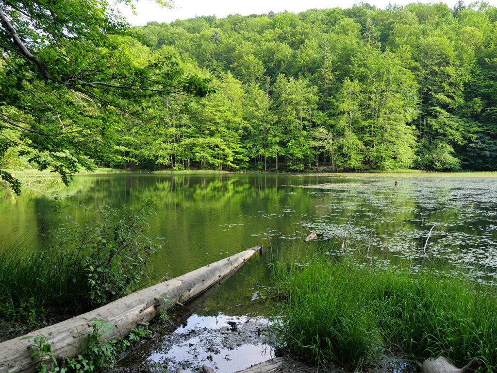 jeziorka duszatyńskie rezerwat zwiezło