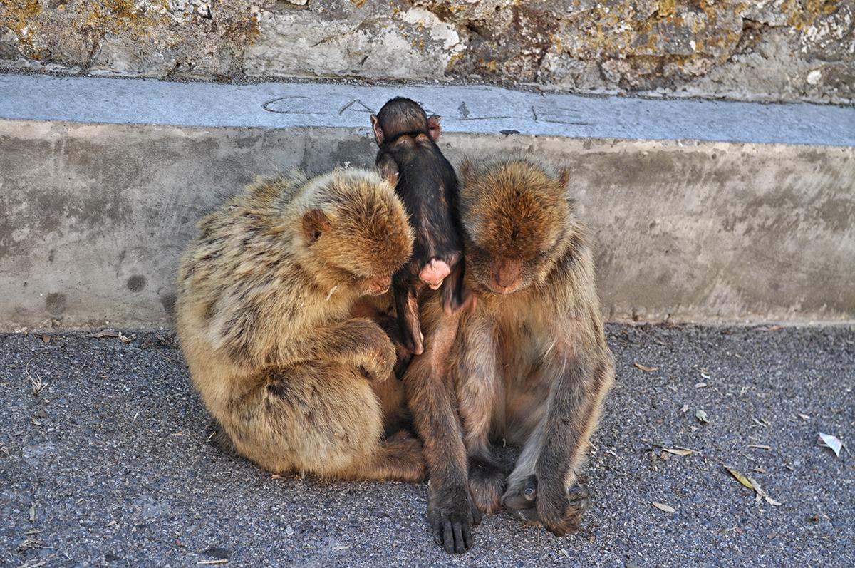 gibraltar małpy blog podróżniczy