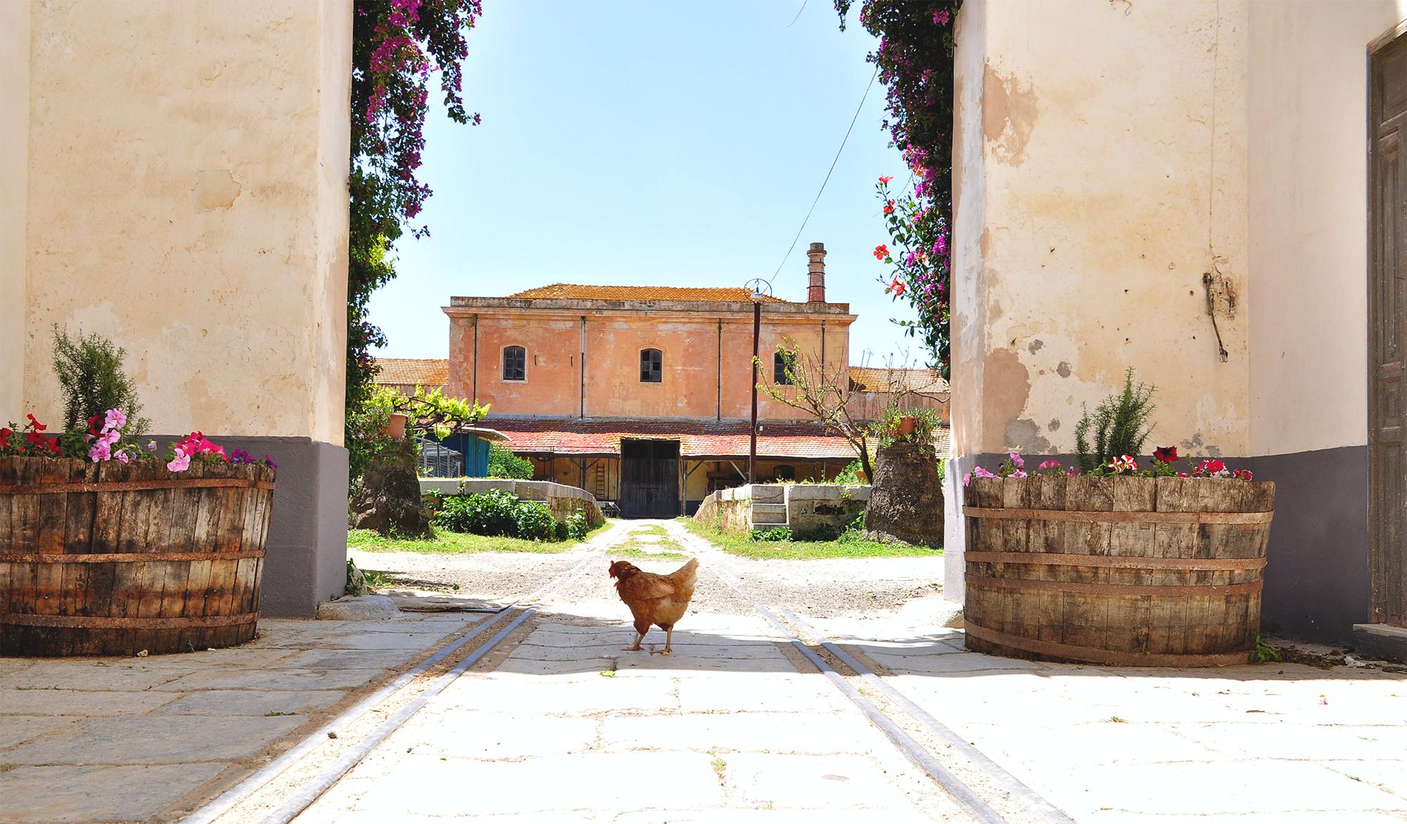 winnica na Sycylii
