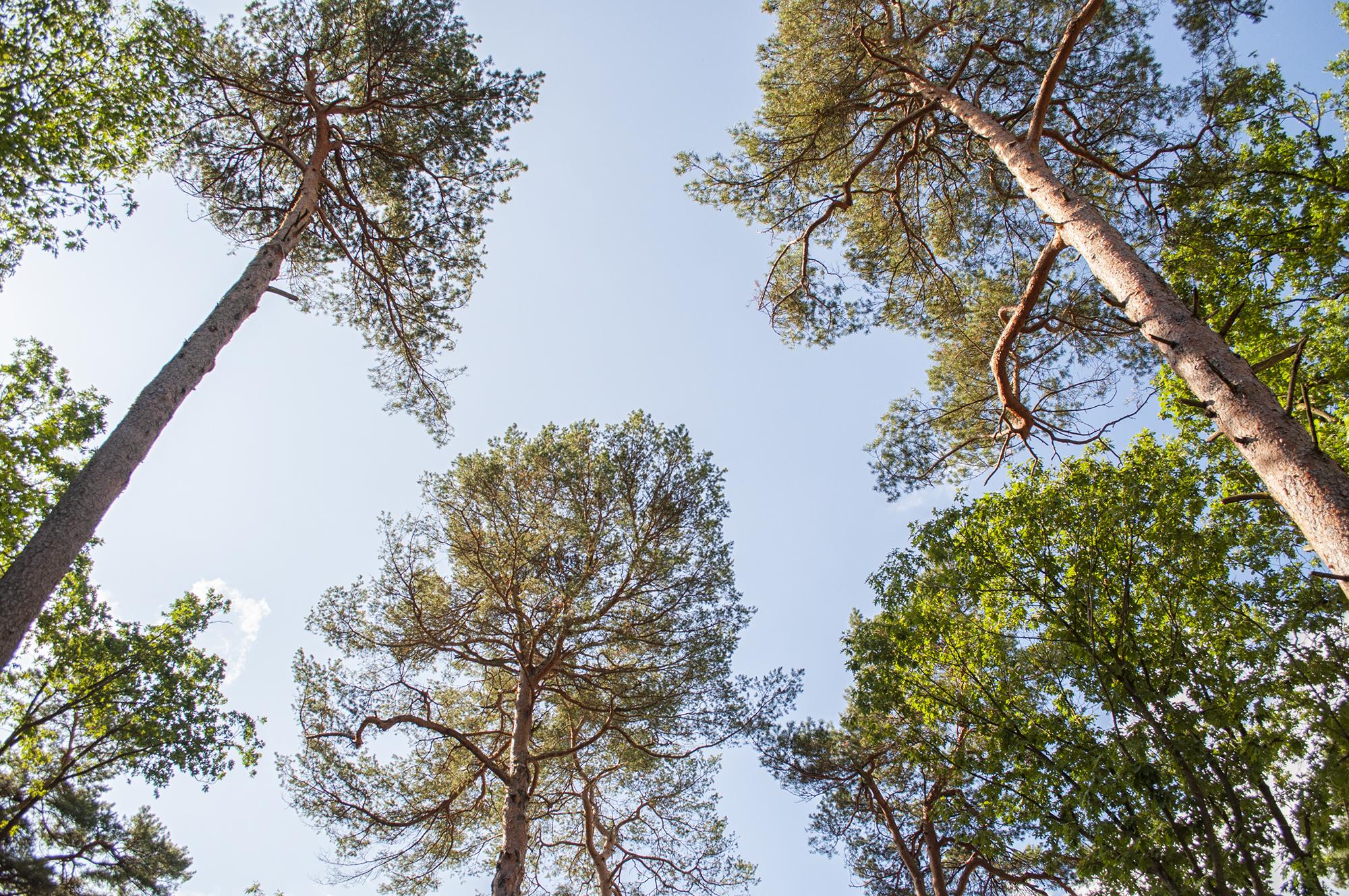 spacer w koronach drzew