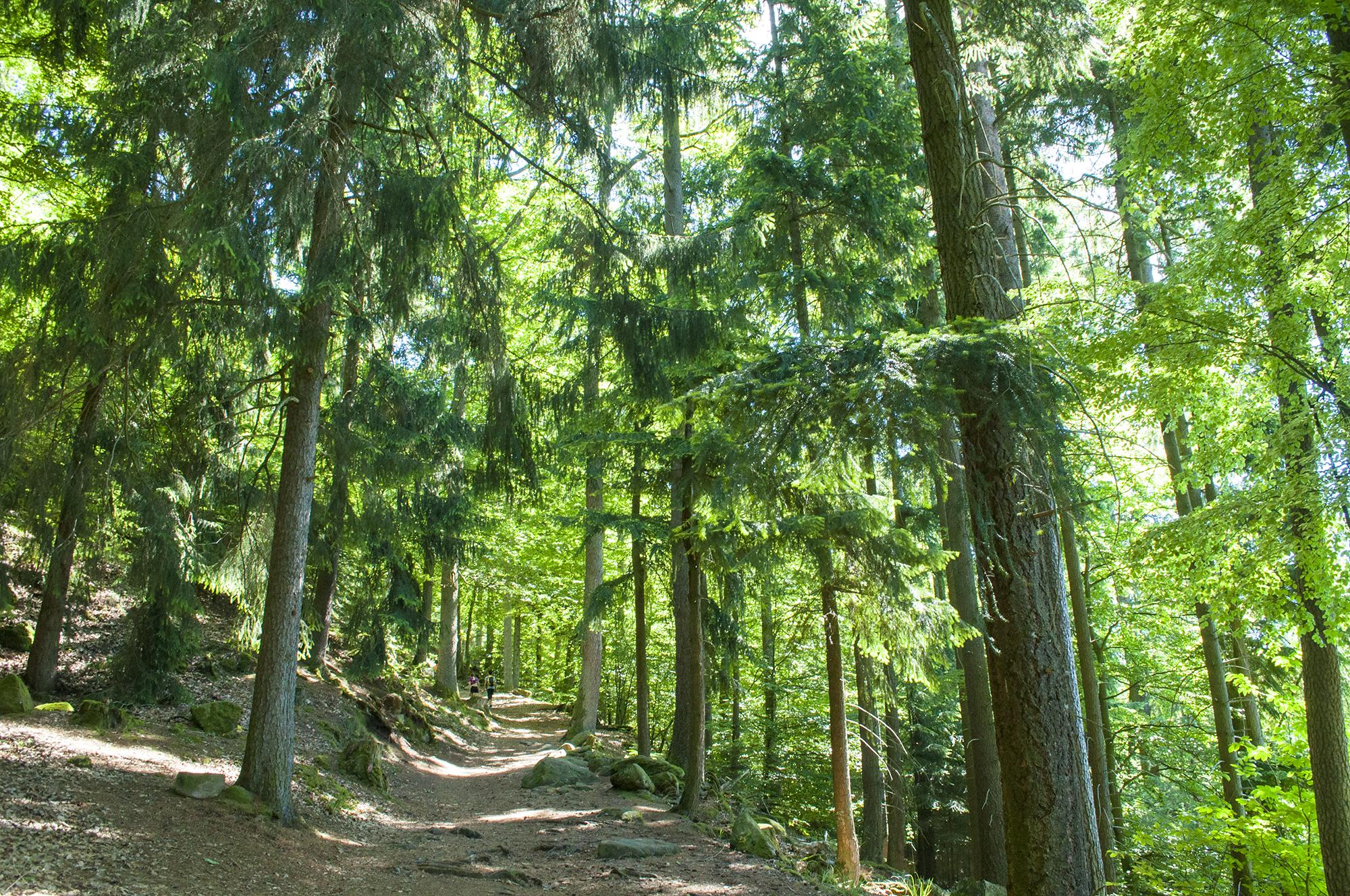wogezy trekking