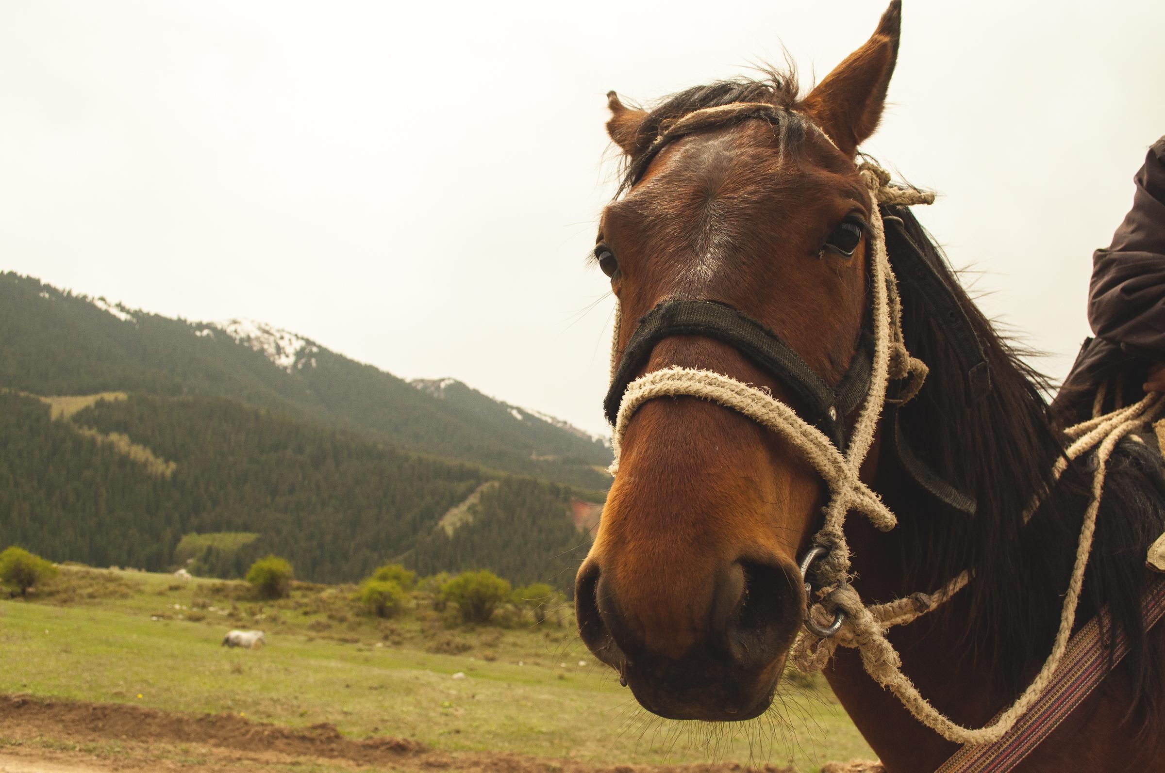 kirgistan jazda konno